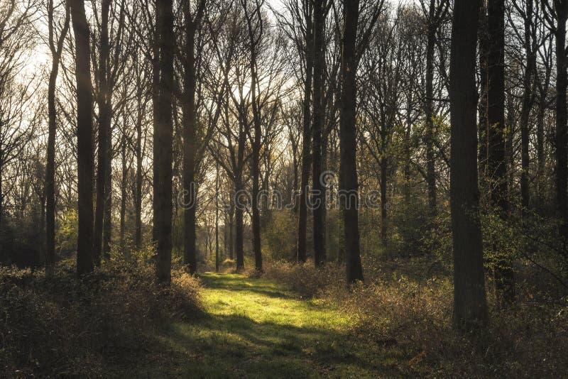 Oszałamiająco wczesnego poranku lasu krajobraz w wiośnie z światłem słonecznym obrazy stock