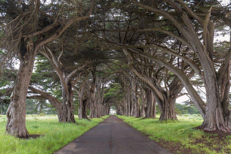 Osza?amiaj?co Cyprysowego drzewa tunel przy punktu Reyes Krajowym Seashore, Kalifornia, Stany Zjednoczone Bajek drzewa w pięknym  zdjęcia stock