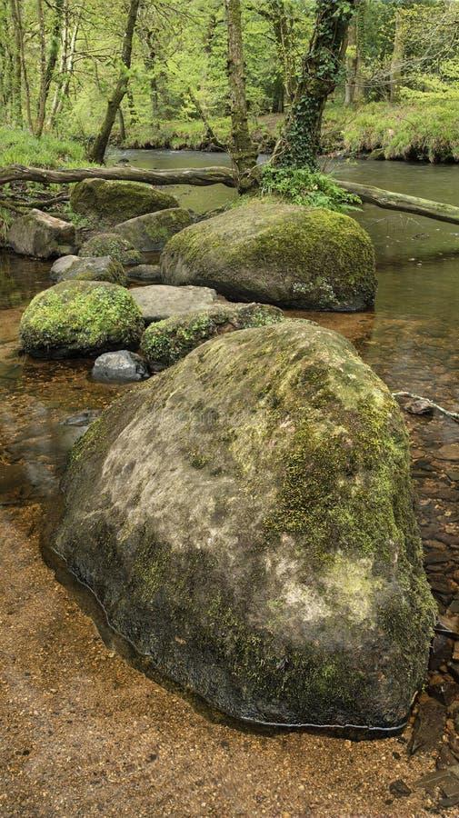 Osza?amiaj?co pokojowy wiosna krajobrazu wizerunek Rzeczny Teign sp?ywanie przez bujny zieleni lasu w Angielskiej wsi zdjęcia royalty free