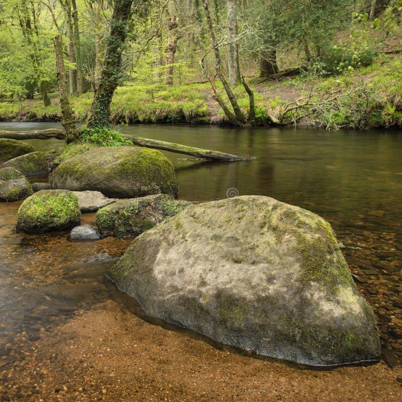 Osza?amiaj?co pokojowy wiosna krajobrazu wizerunek Rzeczny Teign sp?ywanie przez bujny zieleni lasu w Angielskiej wsi zdjęcie stock