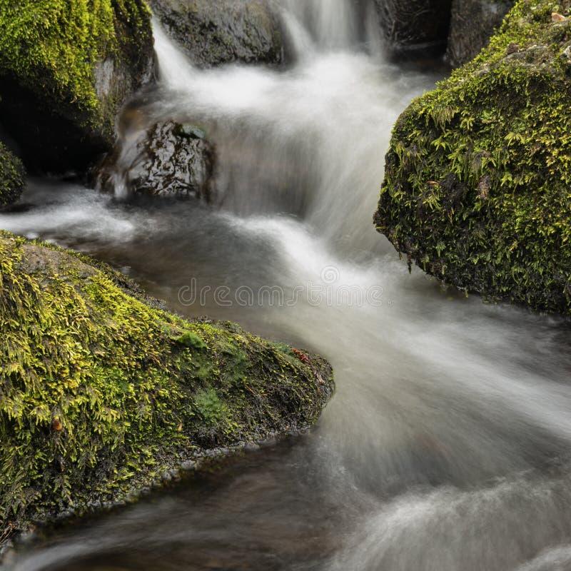 Osza?amiaj?co pokojowy wiosna krajobrazu wizerunek Rzeczny Teign sp?ywanie przez bujny zieleni lasu w Angielskiej wsi obraz stock