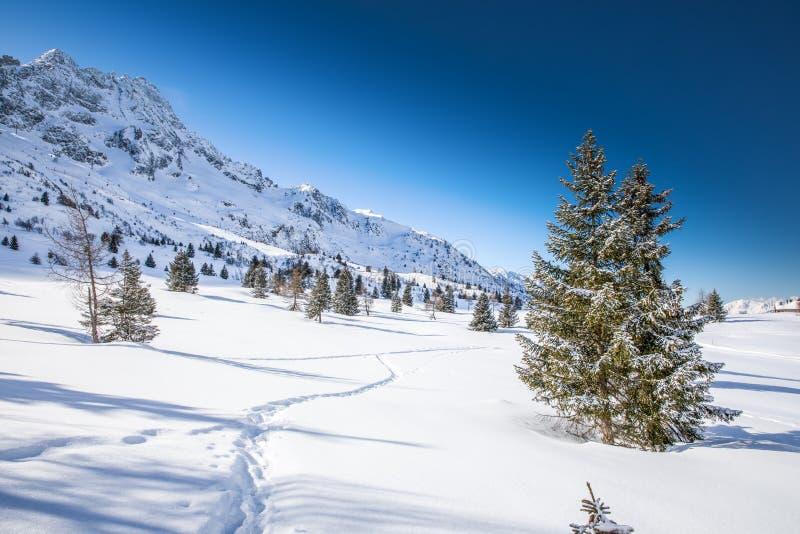 Osza?amiaj?co zimy wsch?d s?o?ca nad Adamello, Presanella g?ry od Tonale miasteczka, W?oscy Alps, Europa obraz stock