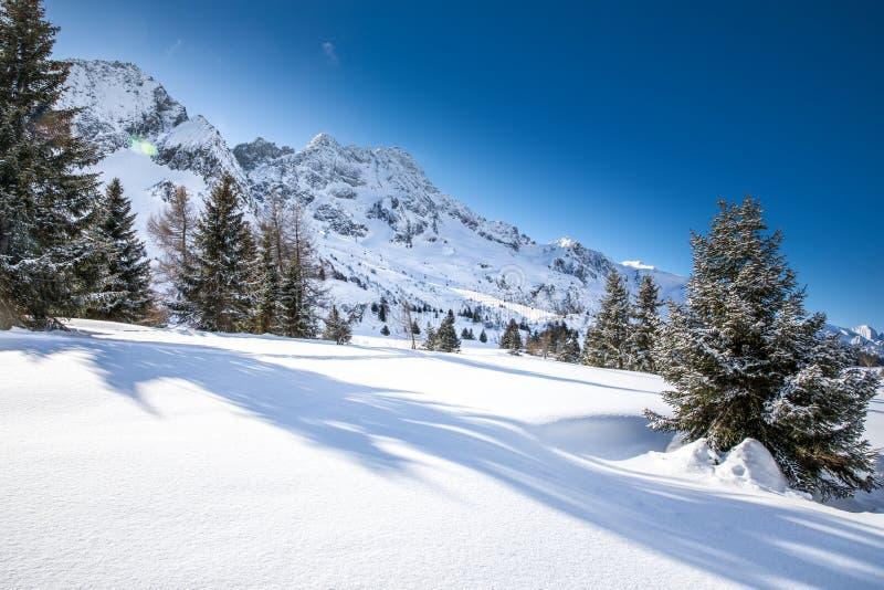 Osza?amiaj?co zimy wsch?d s?o?ca nad Adamello, Presanella g?ry od Tonale miasteczka, W?oscy Alps, Europa fotografia stock