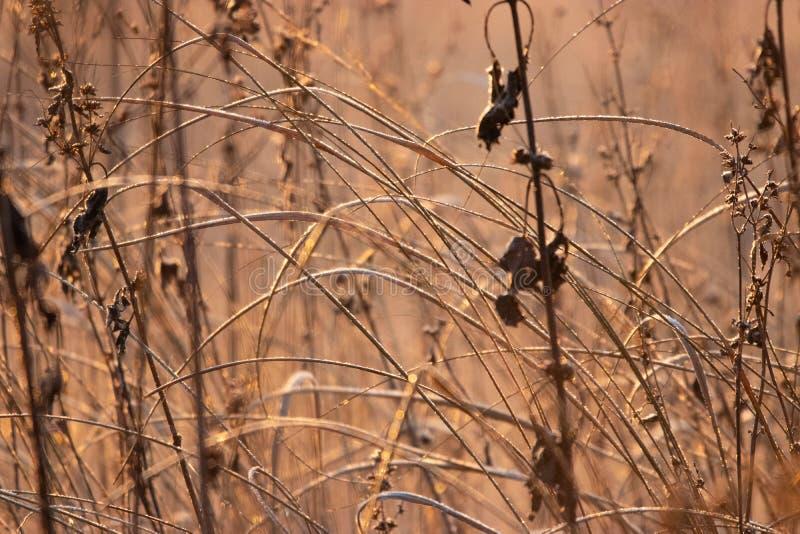 Oszroniejąca trawa na łące obraz stock