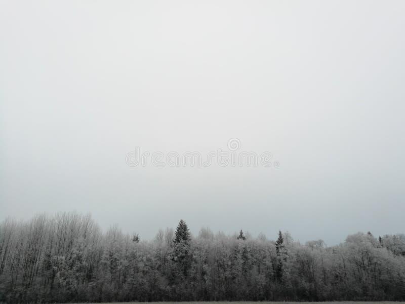 Oszroniejący drzewa podczas zimy obraz stock