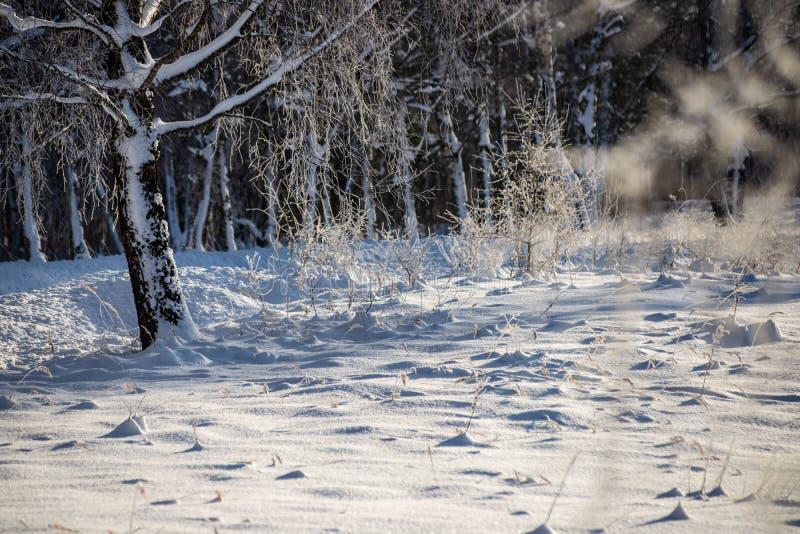 oszronieje zakrywających trawy i brzozy gałąź liście w pogodnym zima ranku świetle fotografia stock