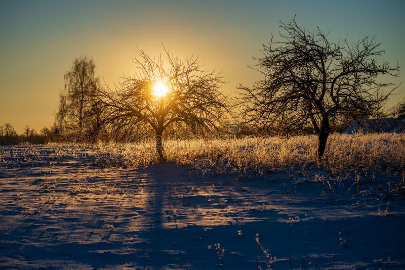 oszronieje zakrywających trawy i brzozy gałąź liście w pogodnym zima ranku świetle obrazy stock
