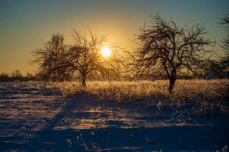 oszronieje zakrywających trawy i brzozy gałąź liście w pogodnym zima ranku świetle obraz stock