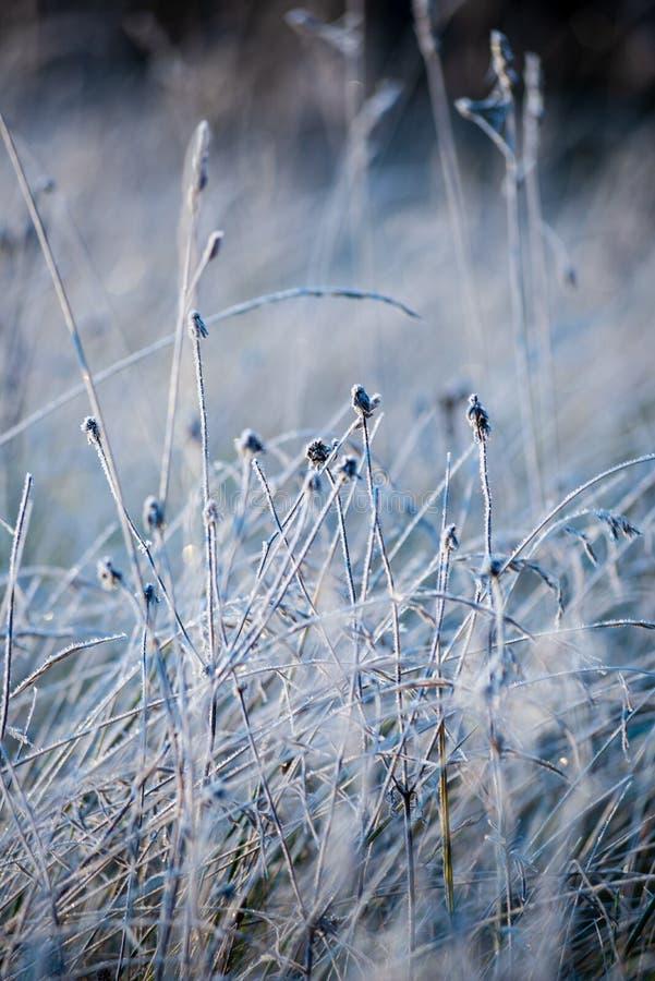 oszronieje zakrywaj?cej trawy i drzewnych li?ci w pogodnym zima ranku ?wietle fotografia stock
