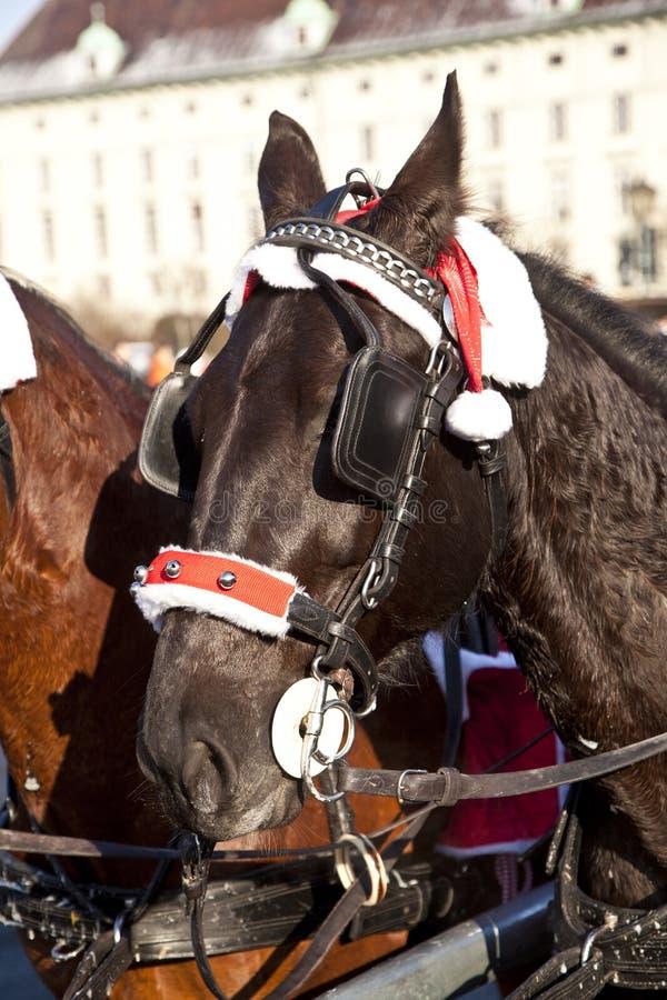 Ot principal um cavalo do fiaker com os antolhos em Viena fotografia de stock