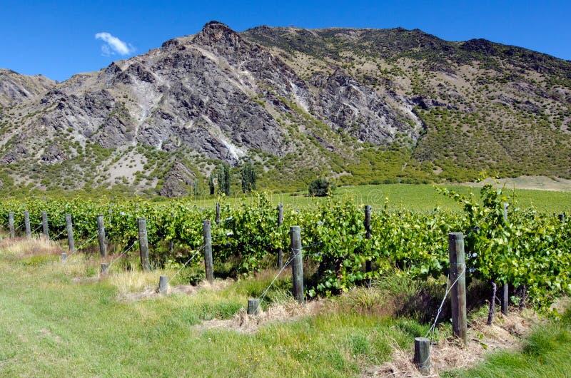 Otago - Neuseeland lizenzfreie stockfotos