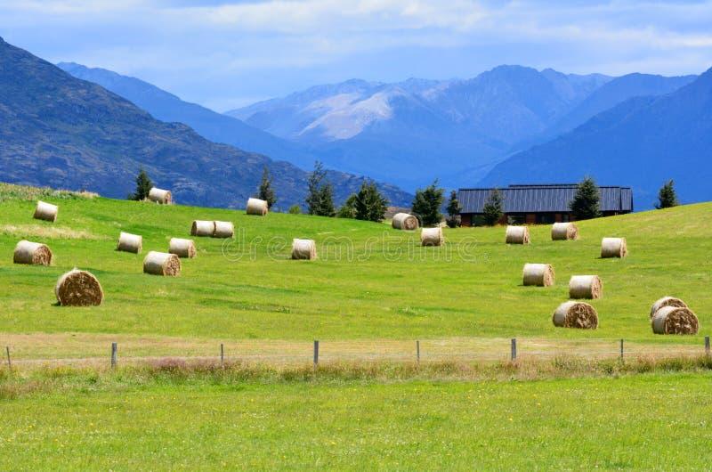 Otago - Nya Zeeland royaltyfria bilder