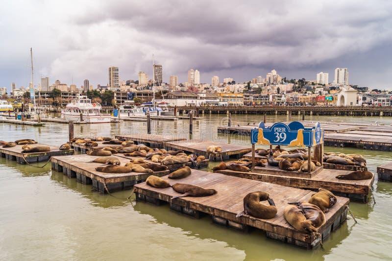 Otaries de la jetée 39 et horizon de San Francisco photos stock