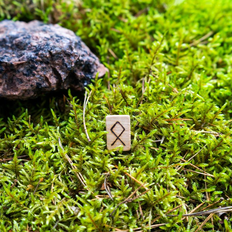 Otila Scandinavian rune denoting real estate on wet moss. The concept of predicting the future, an ancient way of divination royalty free stock photography
