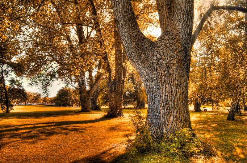 otoño imagenes de archivo