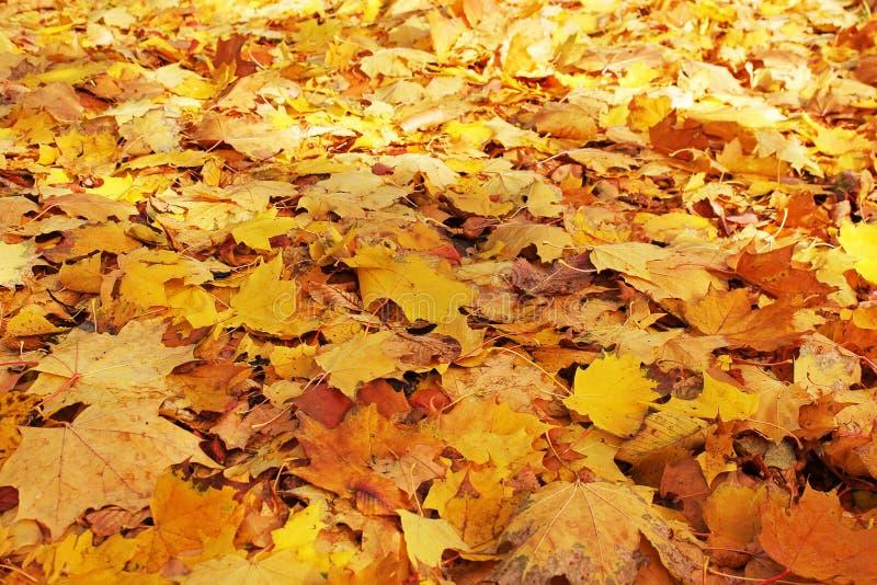 Otoño Autumn Leaves Background imagenes de archivo