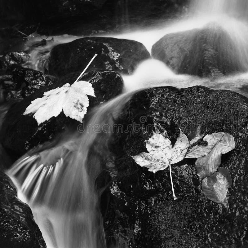 Otoño blanco y negro imagen de archivo libre de regalías