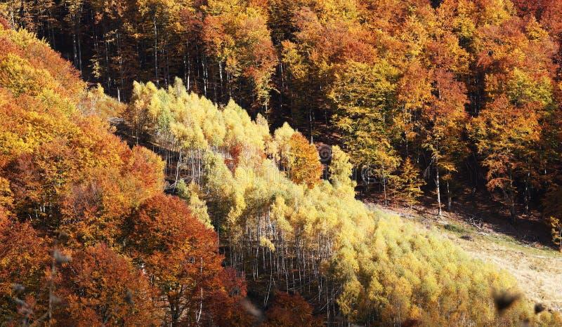 Otoño caliente colorido en montañas rumanas imagen de archivo