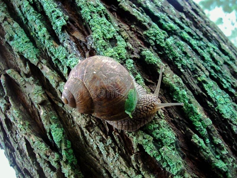 Otoño, caracol, musgo, corteza de árbol, caracol de la uva imagen de archivo libre de regalías