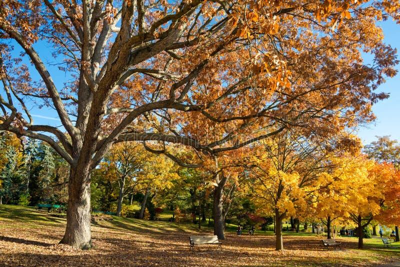 Otoño colorido en parque, Toronto, Canadá fotos de archivo