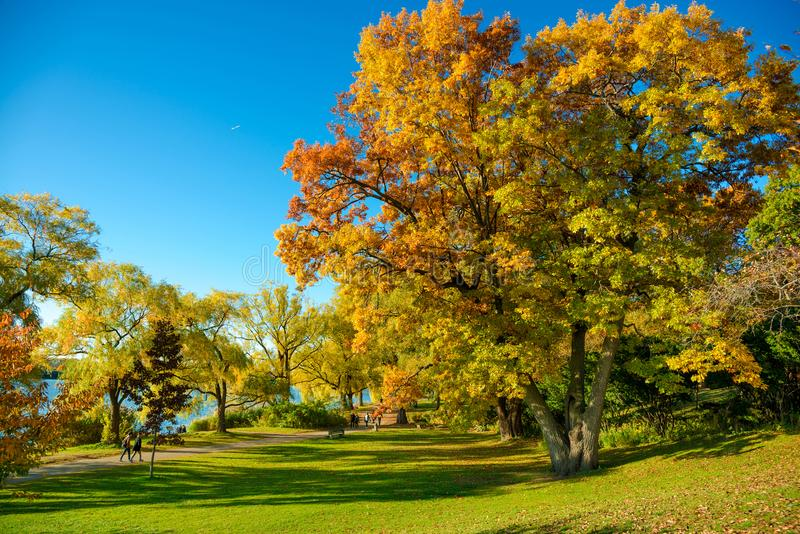Otoño colorido en parque, Toronto, Canadá imagen de archivo