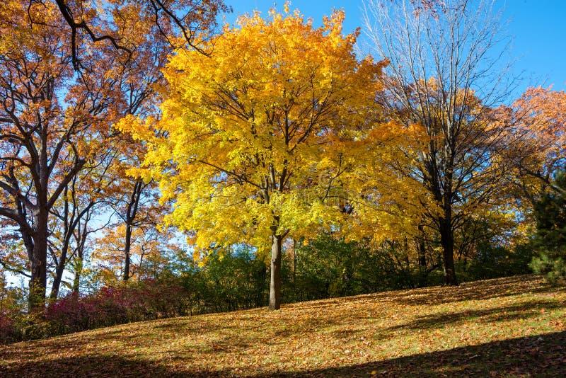 Otoño colorido en parque, Toronto, Canadá fotografía de archivo