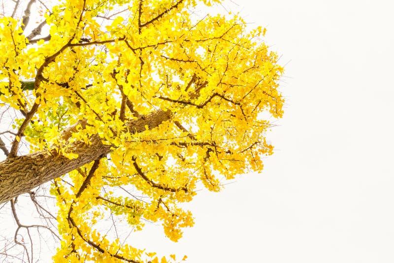 Otoño colorido hermoso imagen de archivo libre de regalías