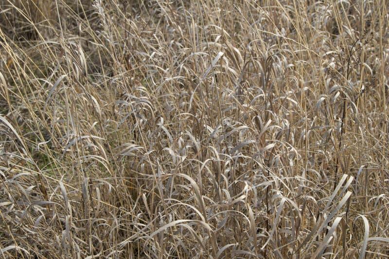 Otoño de la hierba seca fotos de archivo