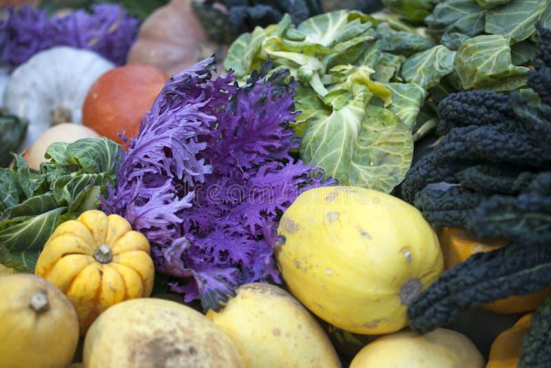 Otoño de las verduras del invierno último en un huerto Reino Unido fotos de archivo