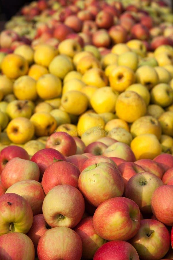 Otoño de los nísperos de la granada de las manzanas de la fruta del otoño en Italia fotografía de archivo