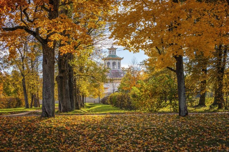 Otoño de oro en Alexander Park cerca de Tsarskoye Selo La ciudad región de Pushkin, Leningrad Aldea china fotografía de archivo