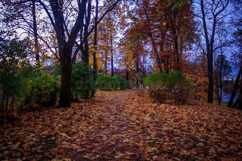 Otoño de oro en el parque de Gatchina imagen de archivo