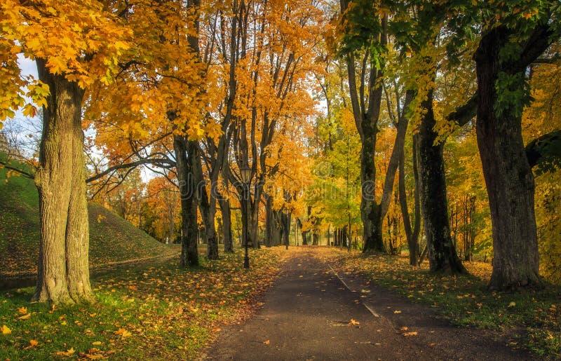 Otoño del paisaje en el parque Un otoño colorido hermoso en un callejón en un parque con amarillo y rojo se va en árboles e hierb fotografía de archivo