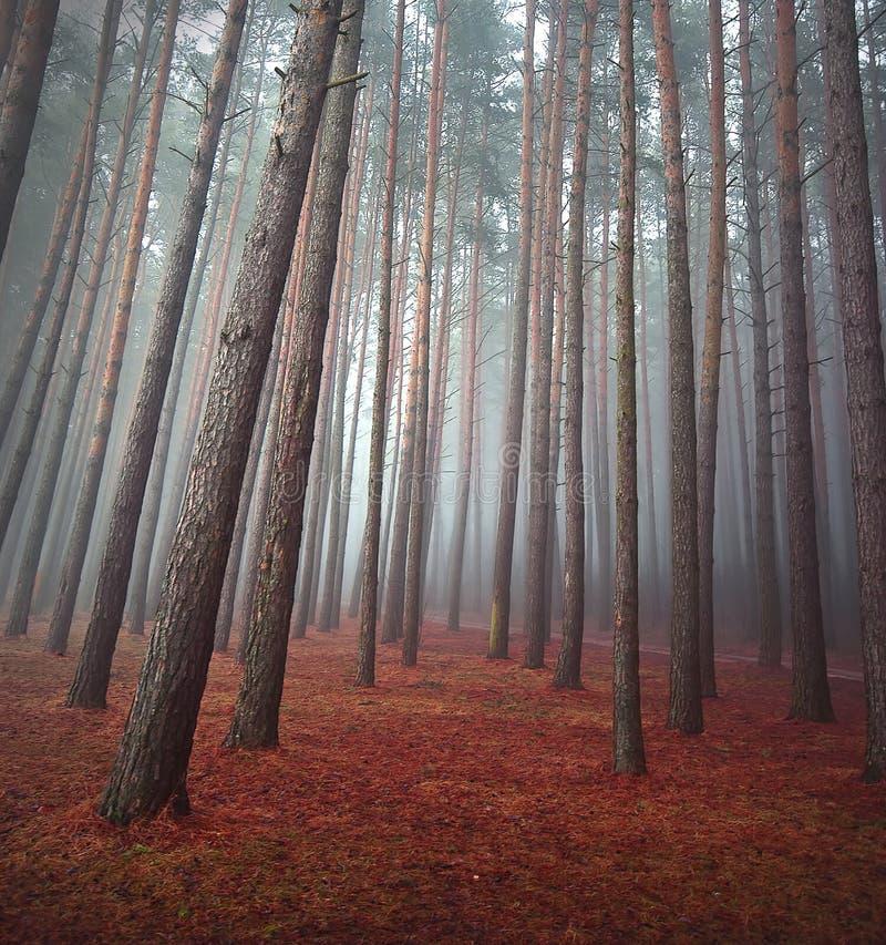 Otoño en bosque imágenes de archivo libres de regalías