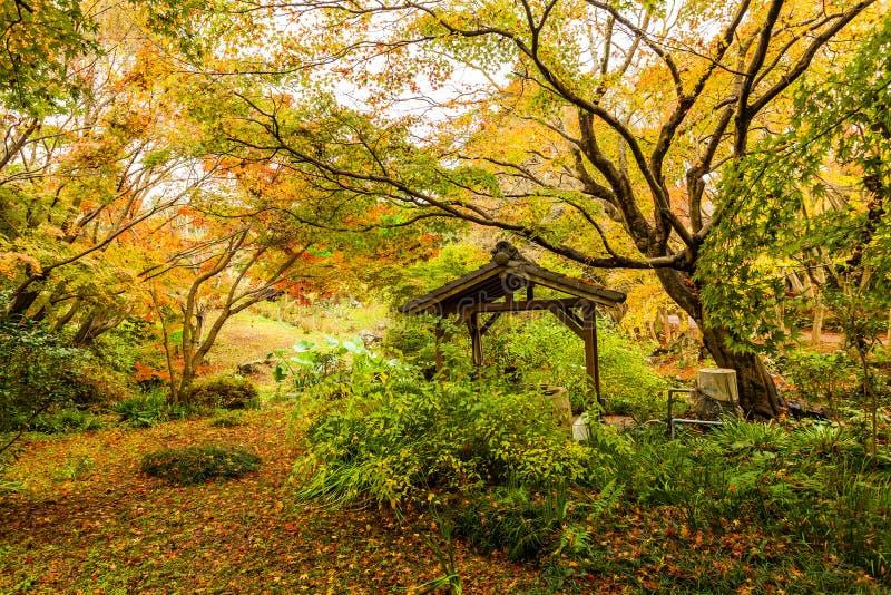 Otoño en bosque en Japón imagenes de archivo