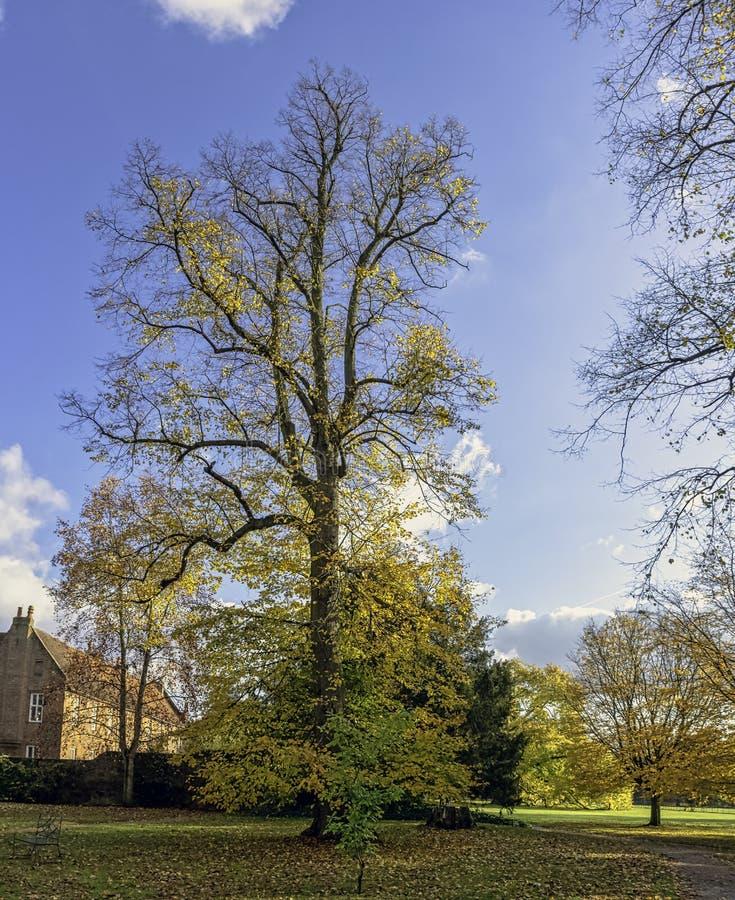 Otoño en el parque británico - Osterley, Isleworth, Londres, Reino Unido imagen de archivo