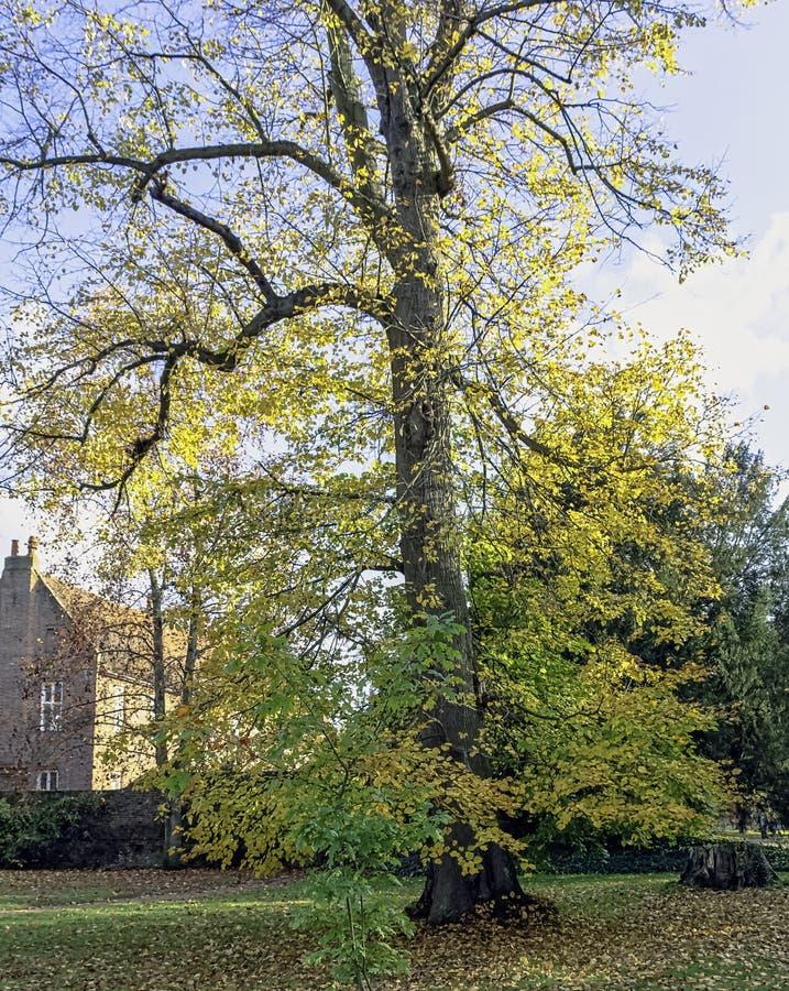 Otoño en el parque británico - Osterley, Isleworth, Londres, Reino Unido fotografía de archivo libre de regalías