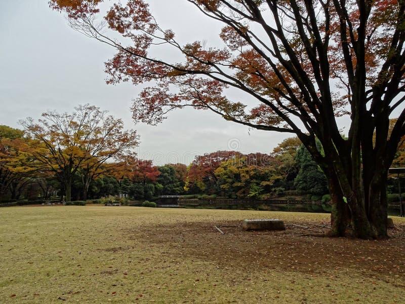 Otoño en el parque de Kitanomaru fotos de archivo