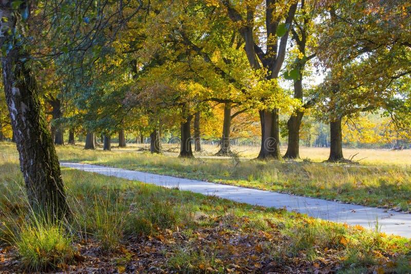 Otoño en el parque nacional De hoge Veluwe, Países Bajos imagen de archivo