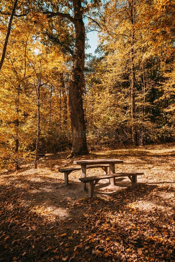 Otoño en el parque, temporada de otoño imagen de archivo libre de regalías