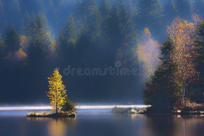 Otoño en un pantano en la montaña de los Vosgos fotos de archivo libres de regalías