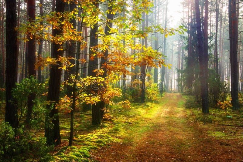 Oto?o esc?nico del bosque del oto?o Camino en arbolado colorido fotos de archivo