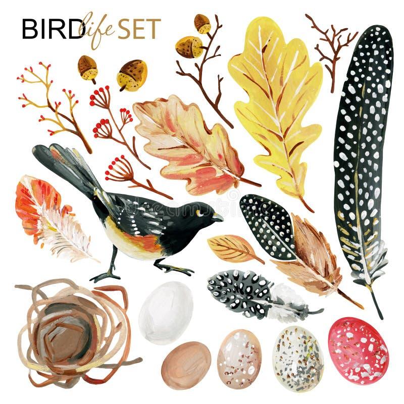 Otoño fijado con las plumas manchadas a mano, pájaro negro, huevos, ramas decorativas, jerarquía, hojas del roble, bellotas de la stock de ilustración