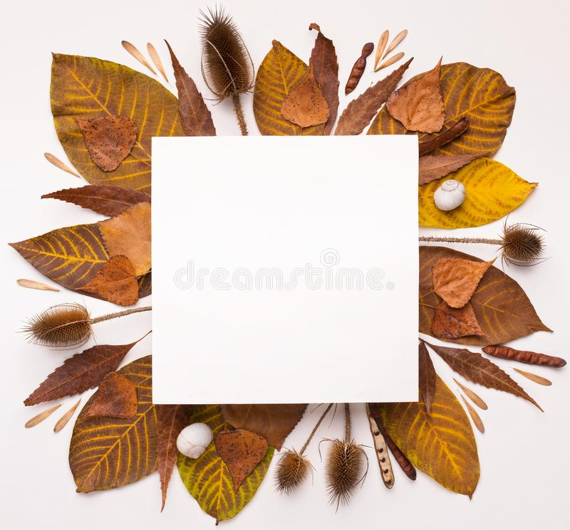 Otoño Herbario de hojas caídas haciendo marco cuadrado imagenes de archivo