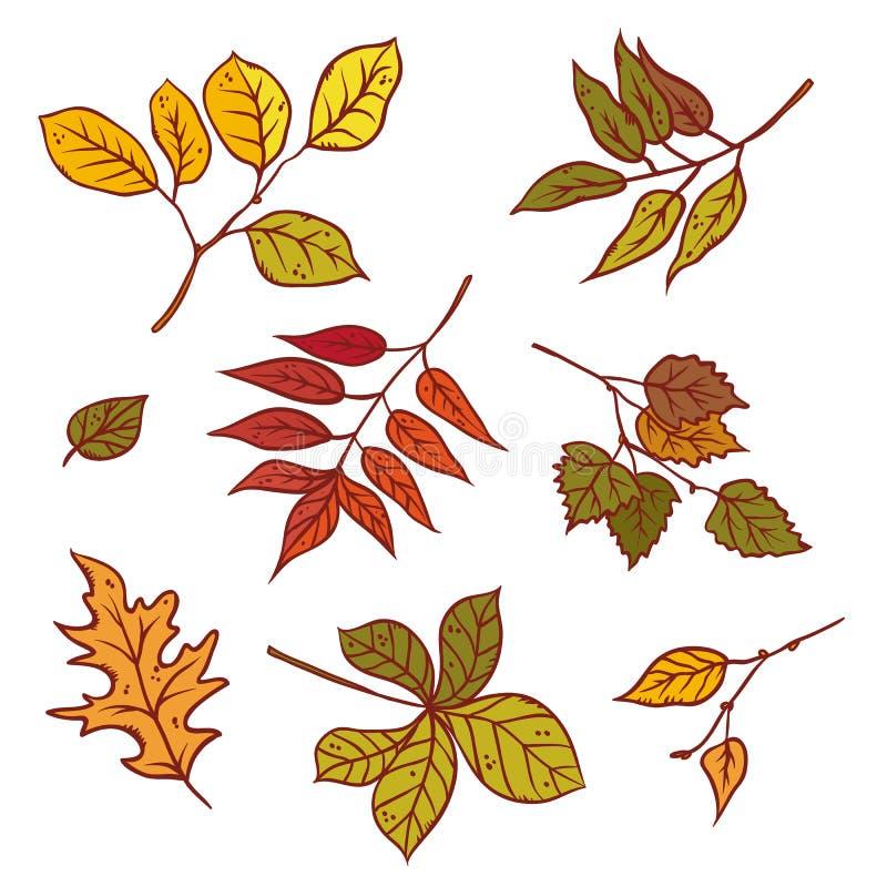 Otoño hojas diversa árboles sistema caída de la hoja septiembre o octubre Colorido del bosquejo del ejemplo del esquema del vecto libre illustration