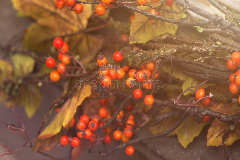 Otoño inmóvil de la vida con las bayas anaranjadas brillantes fotos de archivo