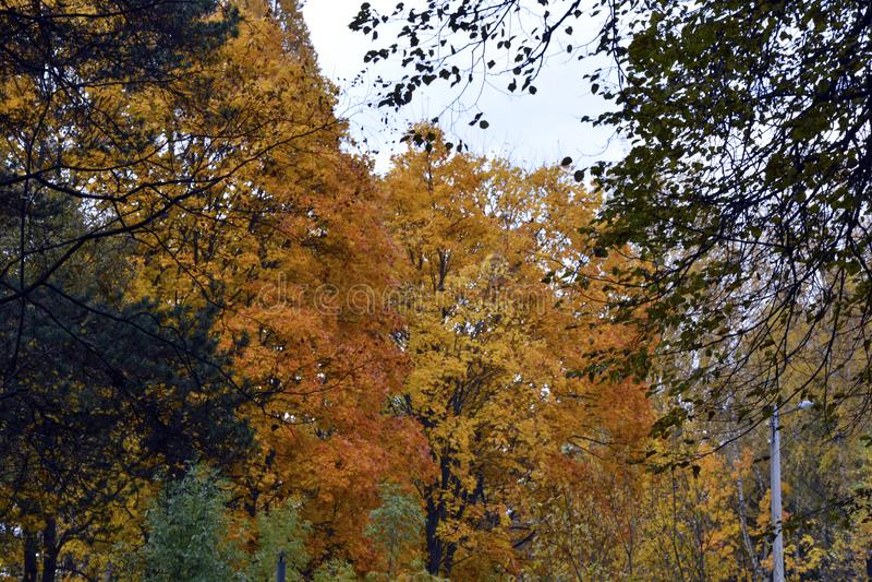 Otoño, naturaleza, cielo nublado del bosque del otoño Hojas de otoño de oro imagen de archivo