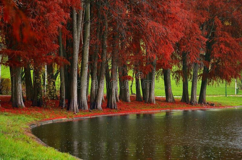 Otoño - parque Tineretului de la ciudad imagenes de archivo