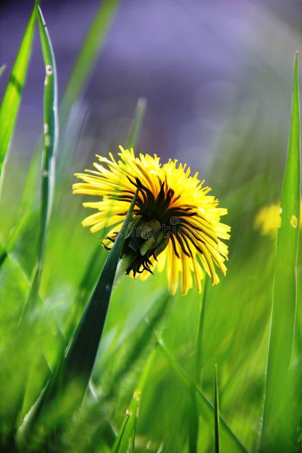 Otoño, respiración, flores, alegría, belleza fotos de archivo