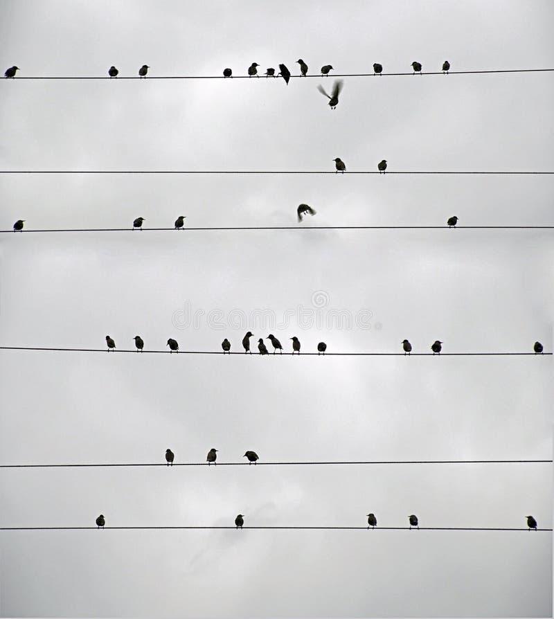 Otoño Una multitud de pájaros en la línea eléctrica starlings imagen de archivo libre de regalías
